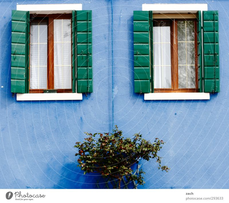 Blue Plant House (Residential Structure) Window Wall (building) Wall (barrier) Facade Living or residing Bushes Italy Village Old town Shutter Venice