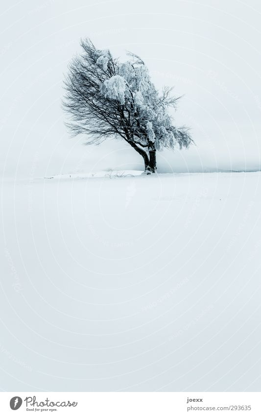 wind Nature Horizon Winter Bad weather Ice Frost Snow Tree Wind cripple Mountain Schauinsland Old Large Cold Blue Black White Power Patient Calm Whimsical