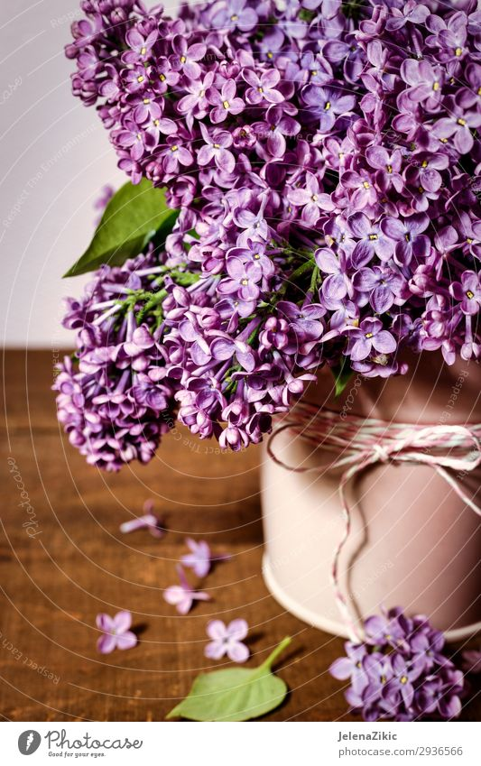Beautiful bouquet of lilacs Nature Summer Plant Colour Tree Flower Leaf Wood Blossom Spring Natural Feasts & Celebrations Garden Decoration Bright