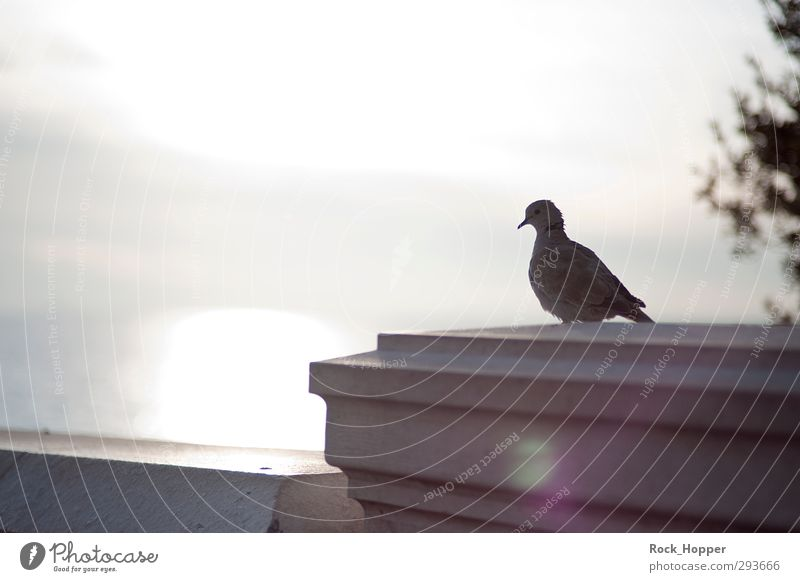 Pigeon with sea view Calm Tourism Far-off places City trip Animal Sky Clouds Sunrise Sunset Autumn Beautiful weather Coast Ocean Mediterranean sea Nice France