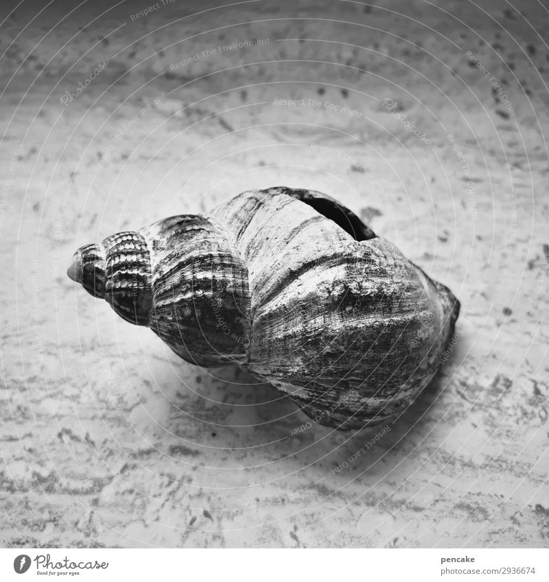 Air upwards Snail Old Esthetic Authentic Broken Hollow Marine animal Death Empty Stone slab Marble Cold Black & white photo Interior shot Close-up
