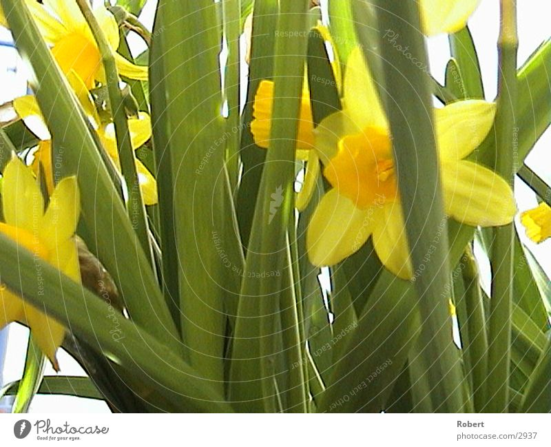 plants Spring Sun