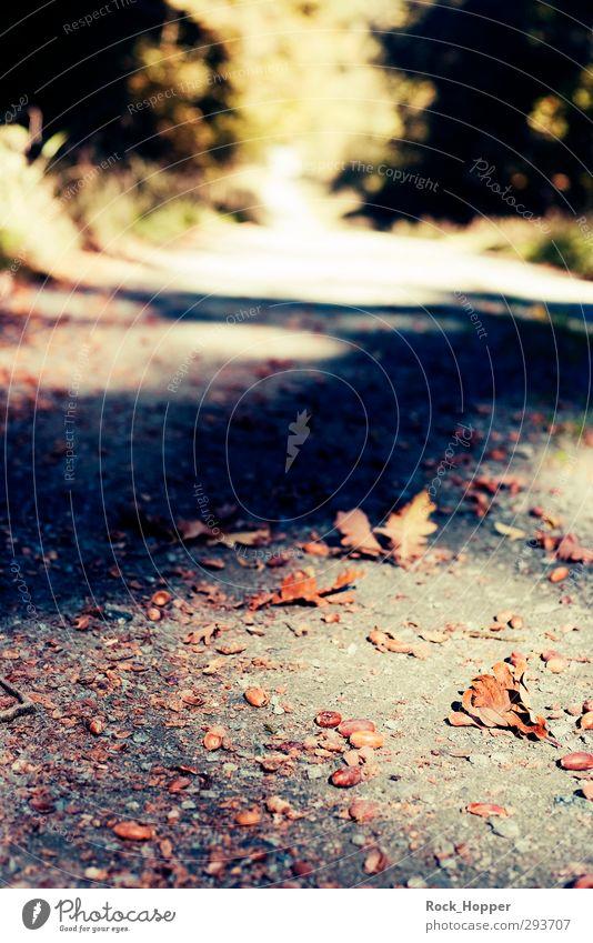 glans road Trip Hiking Jogging Environment Nature Plant Earth Sand Autumn Tree Foliage plant Acorn Oak leaf Park Forest Hill Mountain Highlands Lanes & trails
