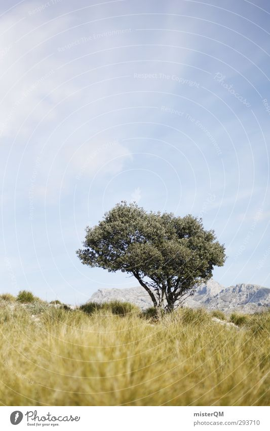 out of the way. Art Adventure Esthetic Nature Tree Spain Majorca Hiking Summery Summer vacation Remote Individual Going Olive tree Subdued colour Exterior shot