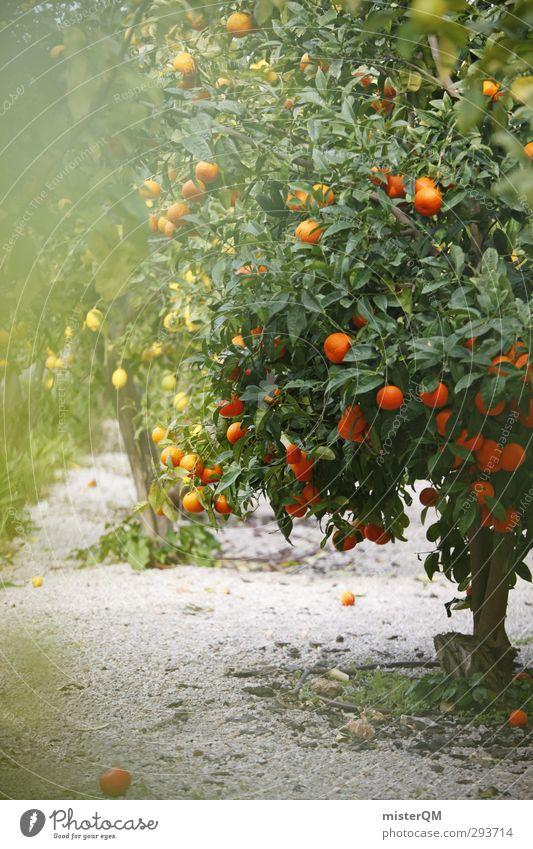 naranja. Art Esthetic Contentment Orange Orange juice Orange tree Orange blossom Orange plantation Lemon Lemon tree Lemon leaf Majorca Spain Blossoming Summer