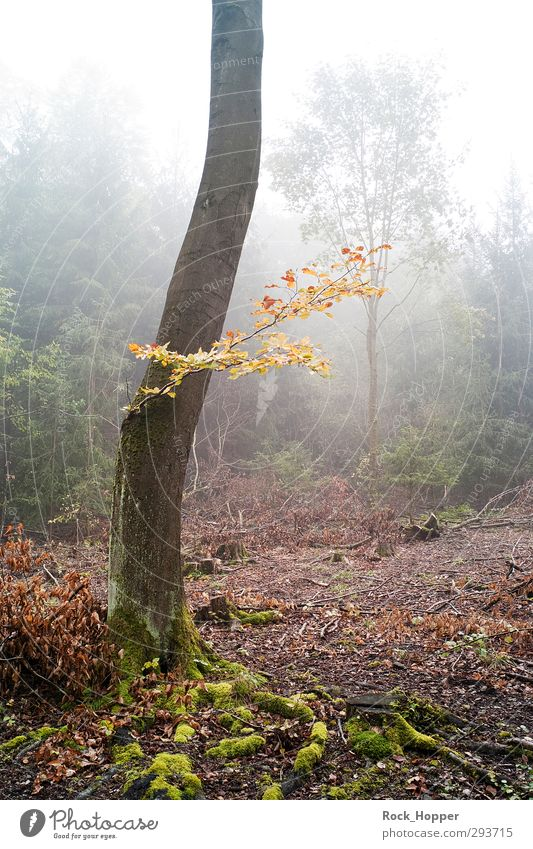cloud forest Harmonious Relaxation Calm Hiking Environment Nature Plant Earth Sky Autumn Fog Tree Bushes Moss Tree bark Branch Leaf Forest Hill Mountain