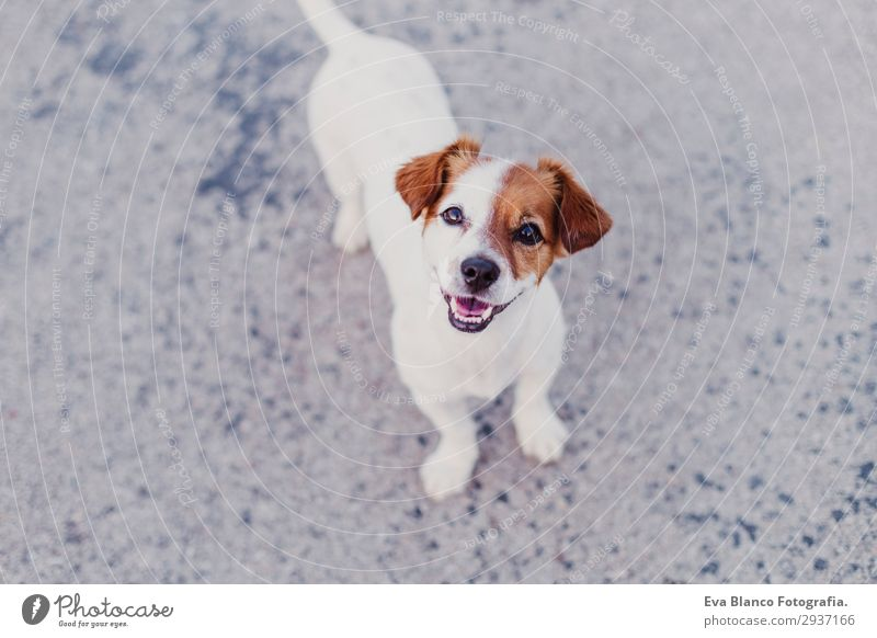 portrait outdoors of a cute happy small dog outdoors Lifestyle Elegant Joy Happy Beautiful Playing Summer Friendship Youth (Young adults) Animal Pet Dog Observe