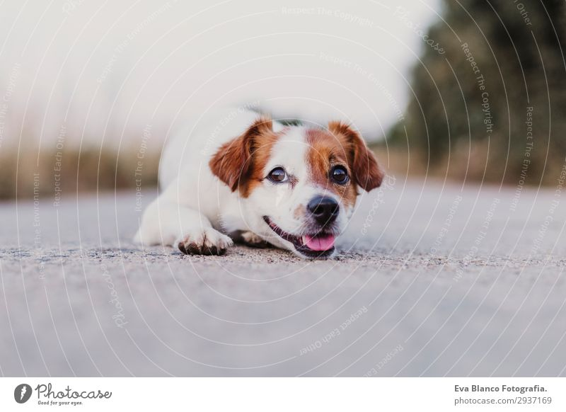 portrait outdoors of a cute happy small dog Dog Summer Beautiful White Animal Joy Black Lifestyle Adults Funny Happy Small Playing Friendship Elegant Smiling