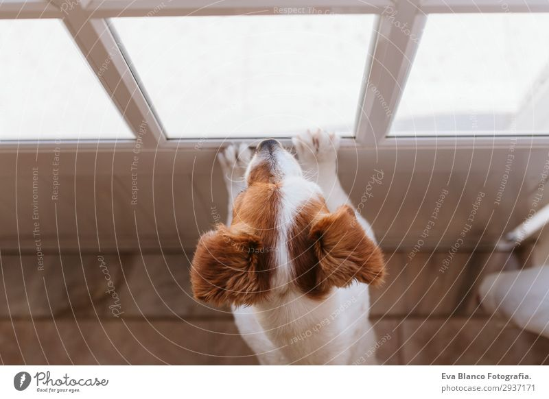 cute small dog standing looking by the window Lifestyle Happy Relaxation Sun House (Residential Structure) Friendship Animal Summer Window Pet Dog 1 Observe