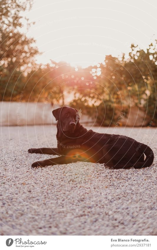 portrait outdoors of a beautiful black labrador Sky Nature Dog Summer Beautiful Sun House (Residential Structure) Animal Joy Black Warmth Garden Sit