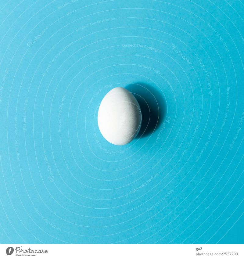 egg Food Egg Nutrition Breakfast Organic produce Vegetarian diet Diet Fasting Easter Esthetic Simple Blue White Modest Refrain Thrifty Uniqueness Idea