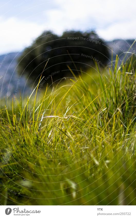In the grass Environment Nature Landscape Plant Elements Air Sky Clouds Climate Climate change Weather Bad weather Tree Grass Bushes Leaf Blossom Foliage plant