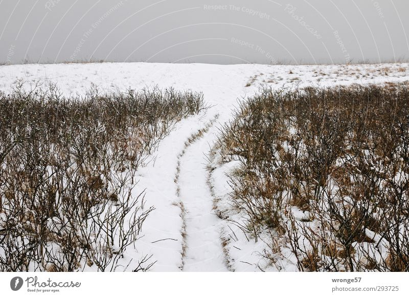 Path at the High Shore Vacation & Travel Trip Winter Snow Hiking Landscape Plant Sky Clouds Bushes Coast Baltic Sea High banks White Snowscape Lanes & trails