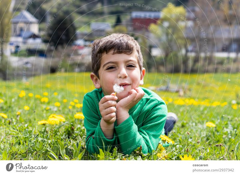 Cute little boy lying down on a field Child Human being Vacation & Travel Nature Summer Plant Beautiful Green White Landscape Sun Flower Loneliness Calm Joy
