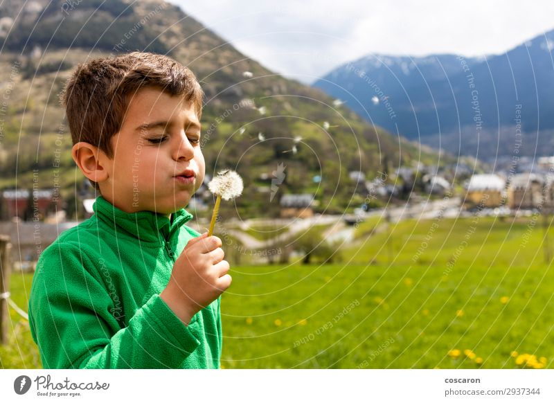 Little boy blowing a dantelion in a green field Child Human being Vacation & Travel Nature Summer Plant Colour Beautiful Green Flower Relaxation Joy Mountain
