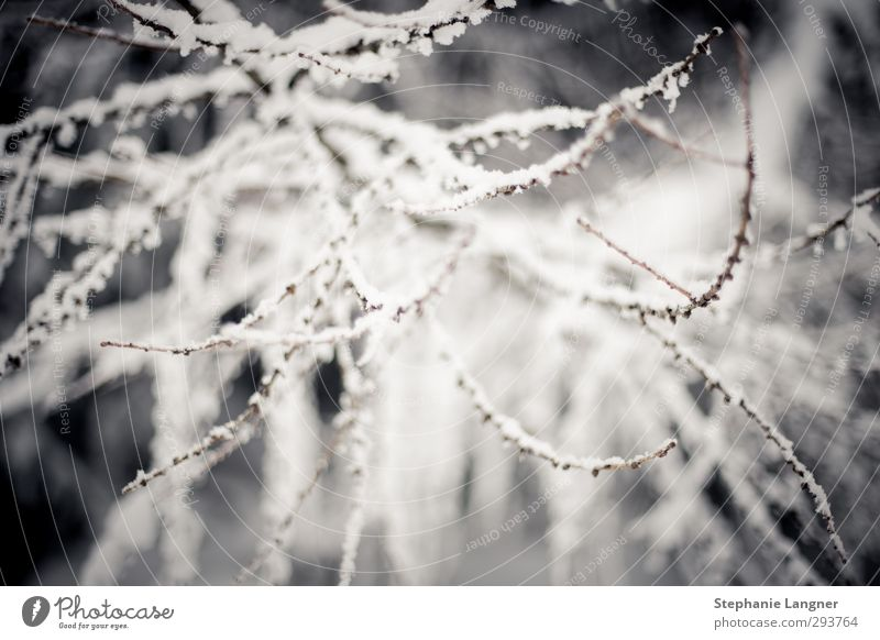 Nature Plant Landscape Calm Winter Environment Snow Ice Weather Bushes Branch Frost Twig Freeze
