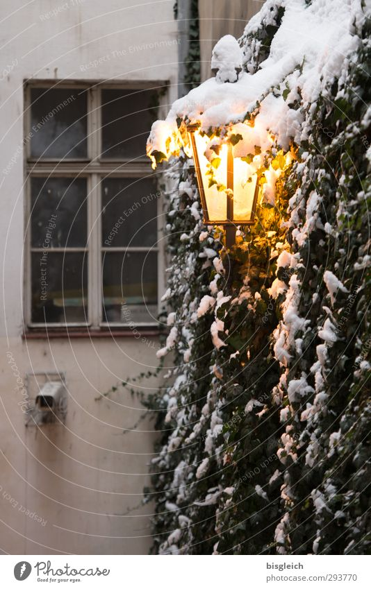 Prague II Winter Snow Plant Czech Republic Europe Old town Window Street lighting Lamp Lamplight Illuminate Cold Warmth Yellow Gray Wall (building) Colour photo