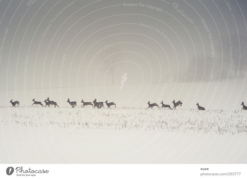 deer incarnation Hunting Environment Nature Landscape Animal Elements Sky Cloudless sky Winter Fog Snow Field Wild animal Group of animals Herd Running