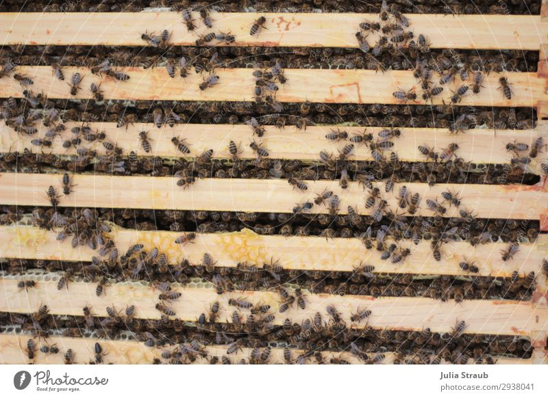 Bees frame wax Flock Build Crawl Healthy Brown Testing & Control Team Teamwork Beehive beeswax Colour photo Exterior shot Day Bird's-eye view
