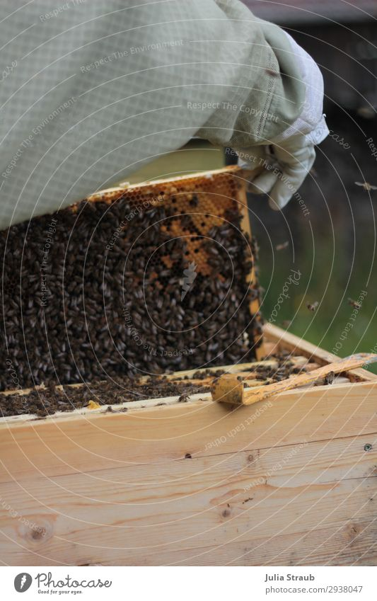 prey bees honey beekeeper Arm 1 Human being Nature Summer Bee Observe Crawl Looking Healthy Brown Movement Arrangement Bee-keeper beehive frame beeswax Gloves