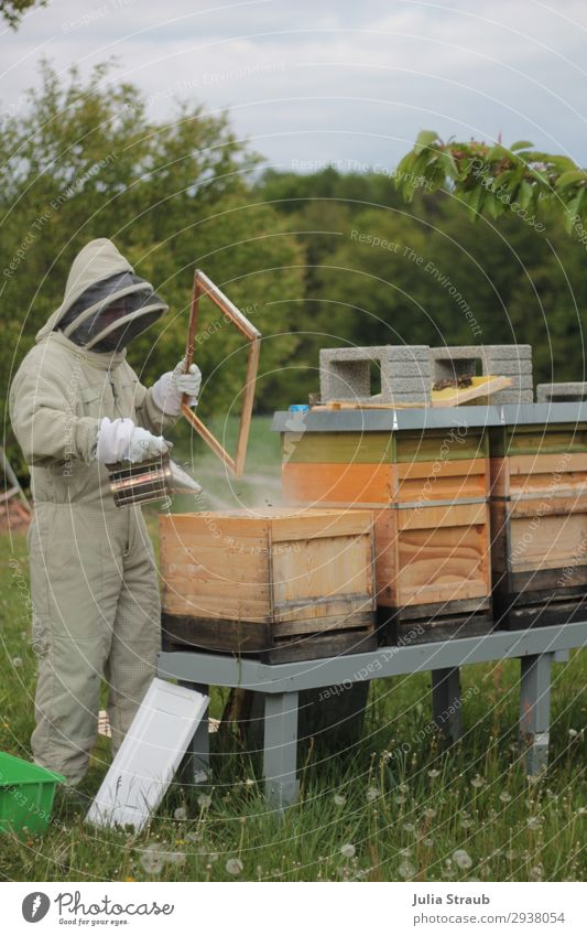 Beekeeper's stall Smoke Bee hive Beekeeper Human being 1 Observe Smoking Exceptional Bee-keeper Meadow Meadow flower Veil Beehive Forest Colour photo