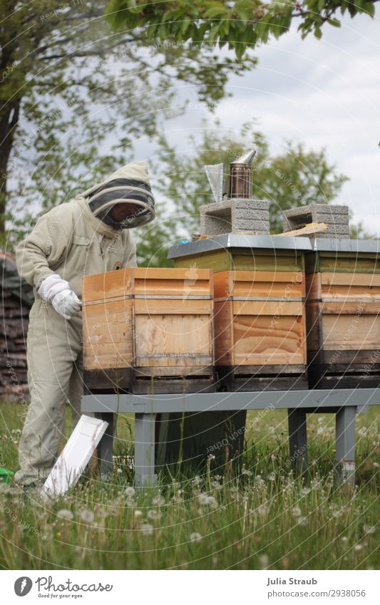 Bee house beekeeper meadow Masculine 1 Human being 30 - 45 years Adults Nature Summer Tree Grass Meadow Observe Movement Looking Green Climate Beehive Veil