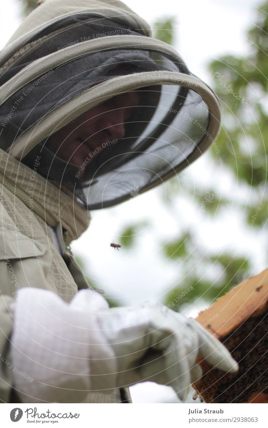 beekeeper beekeeper veil suit bees Human being Masculine 1 30 - 45 years Adults Bee Observe Exceptional Bee-keeper Gloves Protective clothing Testing & Control