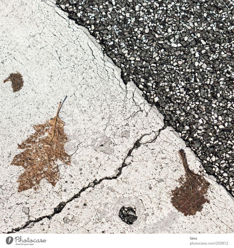 Old Leaf Street Autumn Line Signs and labeling Change Transience Asphalt Decline Tar
