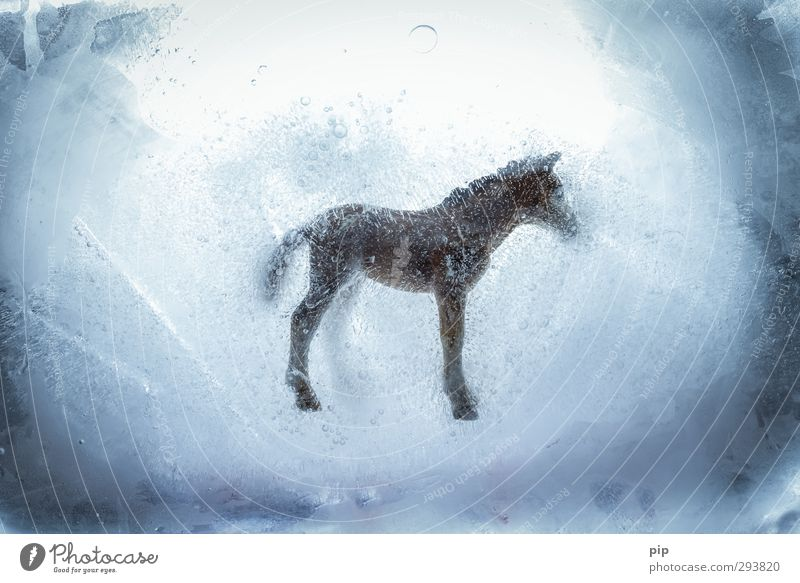 cold-blooded Horse Cold Bizarre Deep frozen Ice Frost false beef Nutrition Betray Scandal horse meat Meat Meat dishes Meat scare Cold store Colour photo