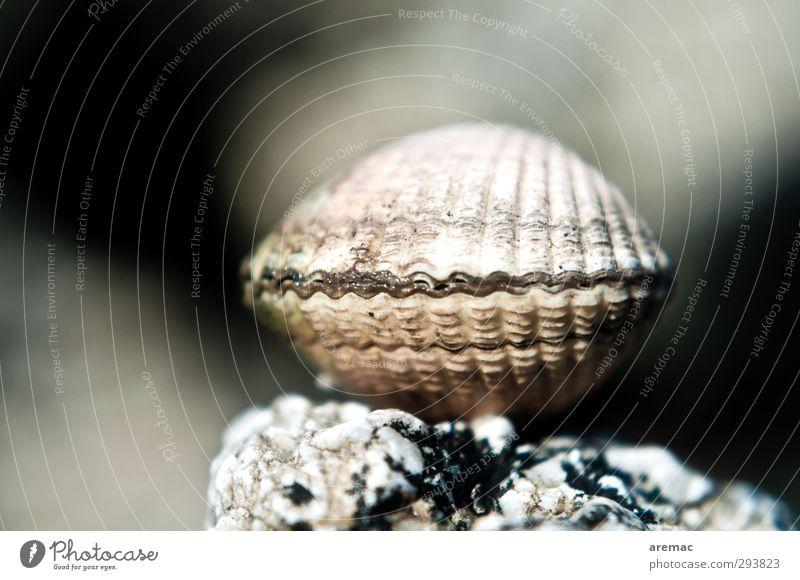 Nature Ocean Animal Beach Gray Coast Mussel Strongbox