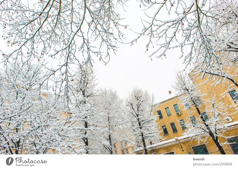 Winter in winter in the city Environment Fog Ice Frost Snow Tree Town Facade Cold Beautiful Yellow White Calm Idyll Colour photo Exterior shot Day