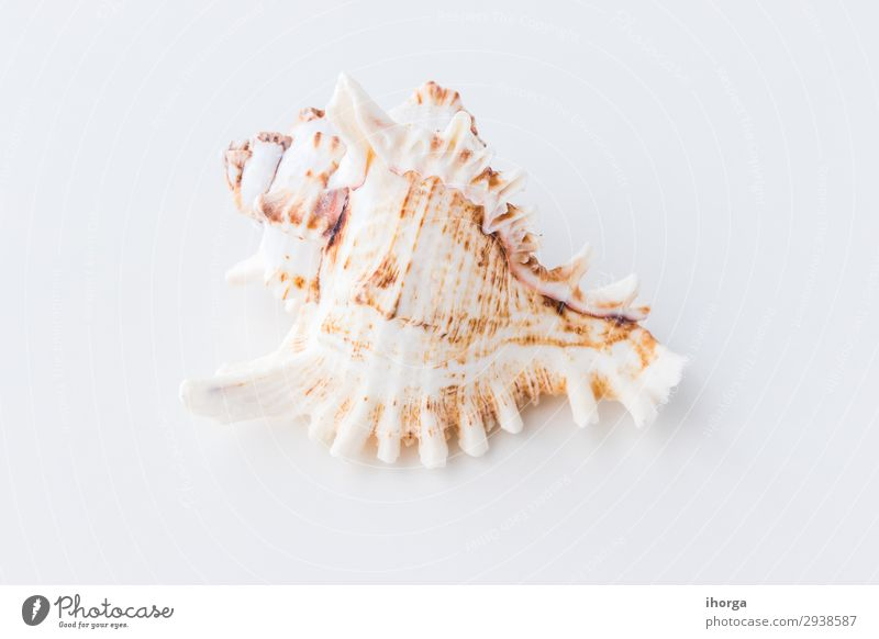 Seashells. Top view with copy space. Design Vacation & Travel Tourism Trip Summer Sun Beach Ocean Wallpaper Nature Sand Coast Natural Clean White Beige