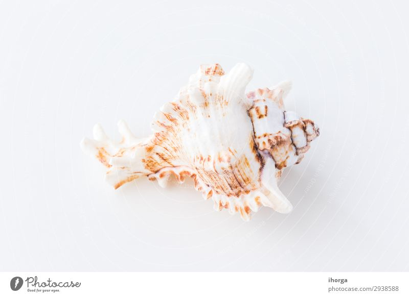 Seashells. Top view with copy space. Flat backdrop background beach beige clean closeup coast concept copyspace design detail frame holiday light marine