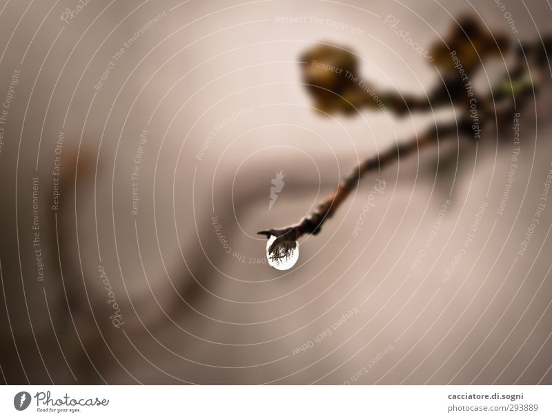 only one drop Plant Drops of water Autumn Weather Bad weather Rain Bushes Dark Simple Wet Round Brown Gray Thrifty Hope Sadness Disappointment Loneliness