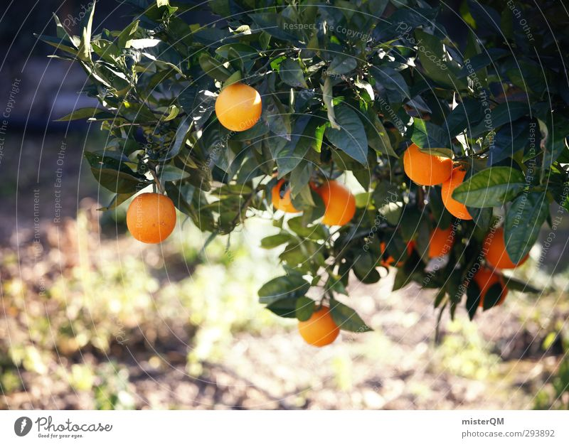 Art Fruit Orange Contentment Growth Esthetic Mature Plantation Orange juice Orange tree Orange plantation Orange peel
