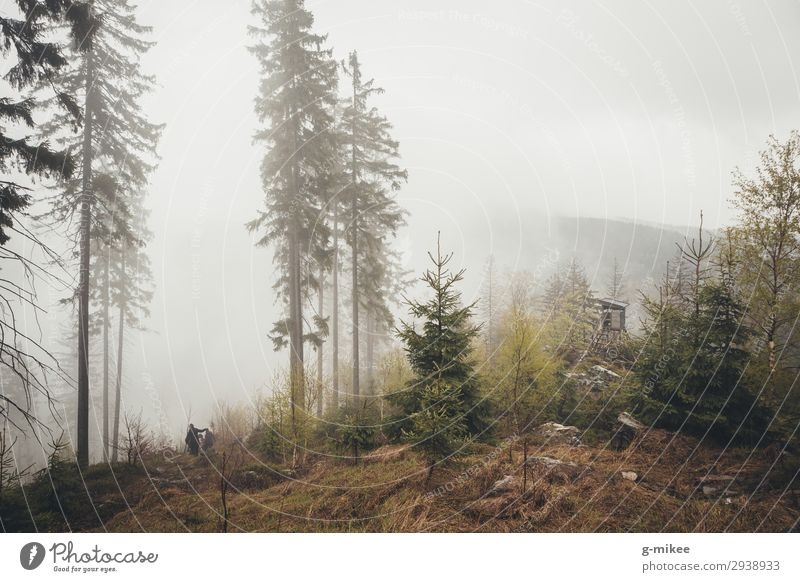 forest in the fog Nature Bad weather Fog Forest Mountain Giant Mountains Discover Hiking Free Bravery Protection Calm Sadness Coniferous forest Hunting Blind