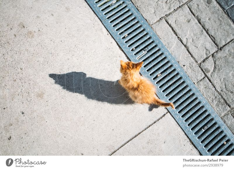 meow Animal Cat 1 Gray Orange White Shadow Shadow play little cat Domestic cat Contrast Silhouette Playing Curiosity Caress Tails Ear Colour photo Exterior shot