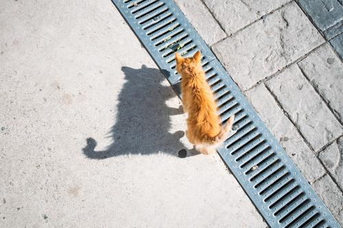 cat Animal Cat 1 Brown Orange Black Baby animal Shadow Shadow play Light Playing Esthetic Curiosity Tails Walking Colour photo Exterior shot Deserted