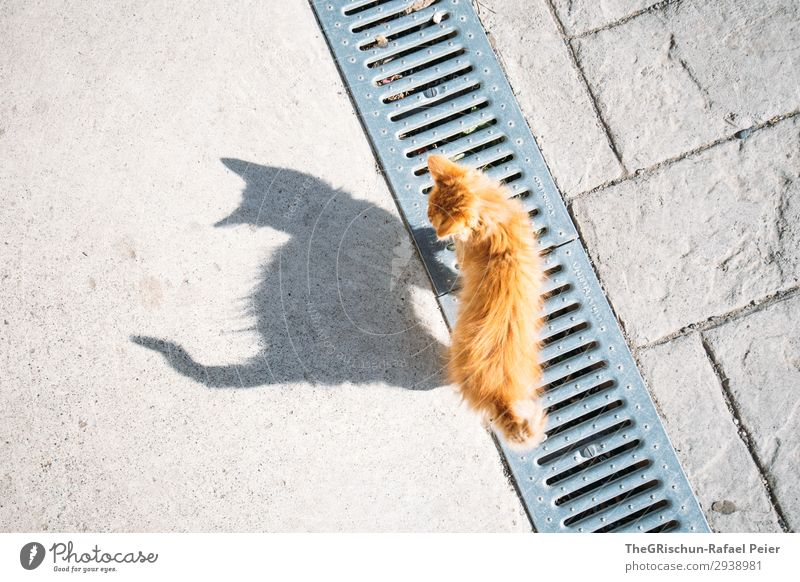 cat Animal Cat 1 Gray Orange Domestic cat Meow Playing Walking Balance Silhouette Shadow Shadow play Curiosity Tails Colour photo Copy Space left