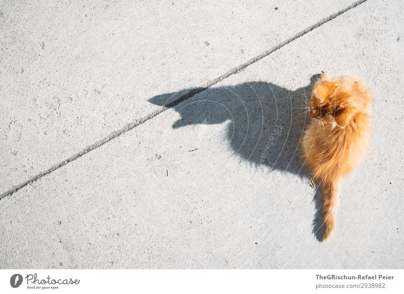 cat Animal Cat 1 Gray Orange Domestic cat Meow Sit Playing Shadow Concrete Ear Silhouette Contrast Light Hair Colour photo Exterior shot Deserted