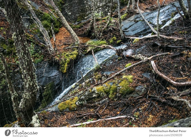 waterfall Nature Green Waterfall Tree Moss Overgrown Rock Flow Root vegetable National Park Patagonia Colour photo Exterior shot Deserted Copy Space top