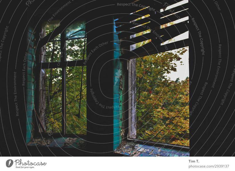 Beelitz inspire Deserted House (Residential Structure) Ruin Wall (barrier) Wall (building) Window Senior citizen Stagnating Sanitarium Brandenburg Autumn