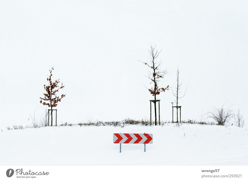 White Tree Red Winter Cold Snow Brown Fog Bushes Traffic infrastructure Road traffic Road sign Shroud of fog Traffic circle