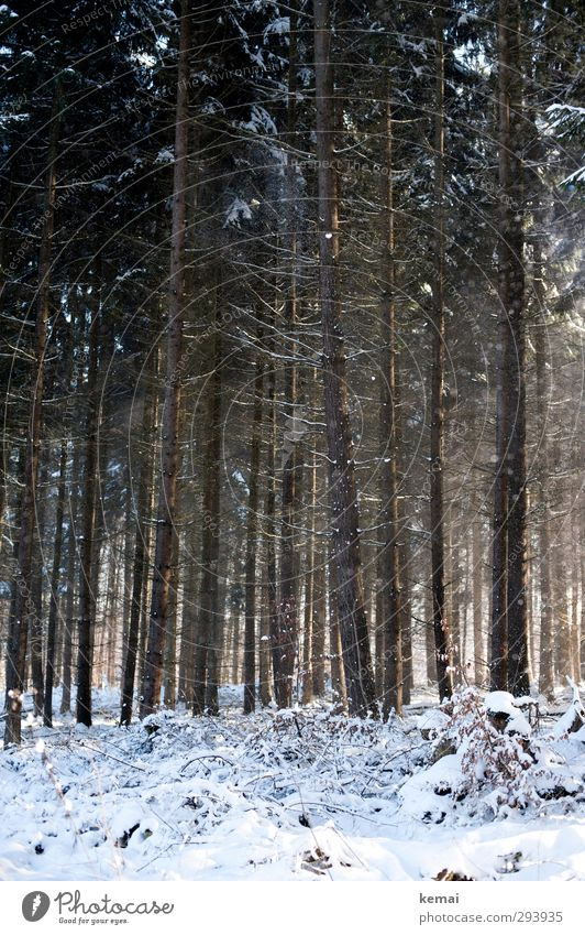 In the woods, there's the snow Environment Nature Landscape Sun Sunlight Winter Beautiful weather Ice Frost Snow Plant Tree Coniferous forest Branch Twig Forest