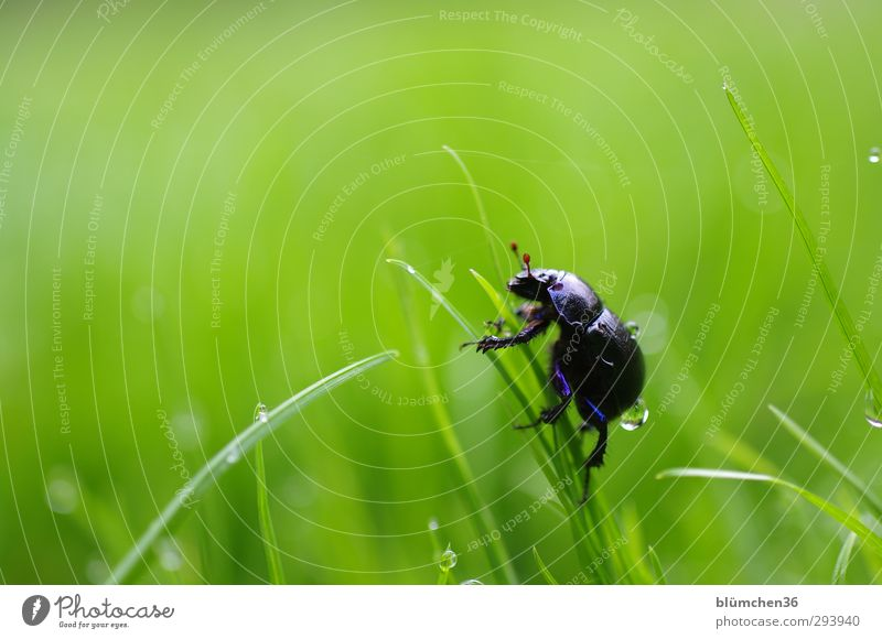 Nature Blue Green Animal Meadow Grass Movement Metal Natural Glittering Walking Drops of water Round Joie de vivre (Vitality) Curiosity Insect
