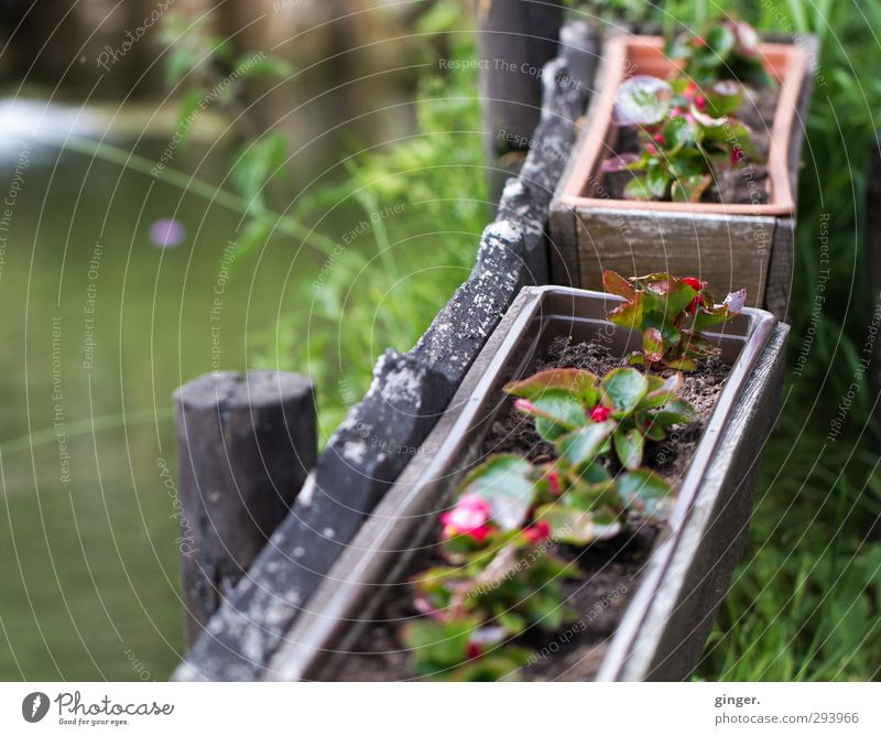 Flowers in the box at the pond Environment Nature Plant Water Spring Weather Pot plant Pond Brown Green Red Window box Small Plantlet Grass Growth Embellish