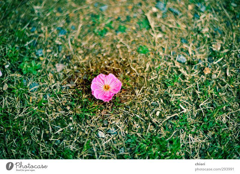 Garden With One Flower