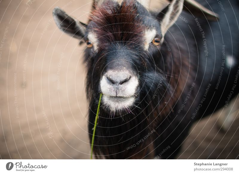 Animal Environment Curiosity Zoo To feed Farm animal Sympathy Love of animals Goats Petting zoo