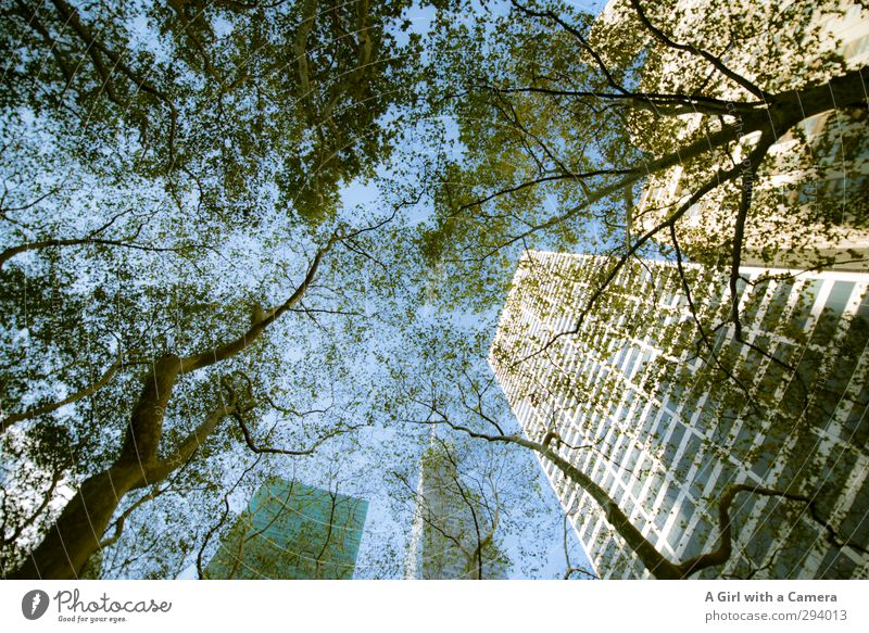 Sky Nature City Tree Wall (building) Autumn Architecture Above Wall (barrier) Tall High-rise Beautiful weather Manmade structures Skyline Cloudless sky Downtown