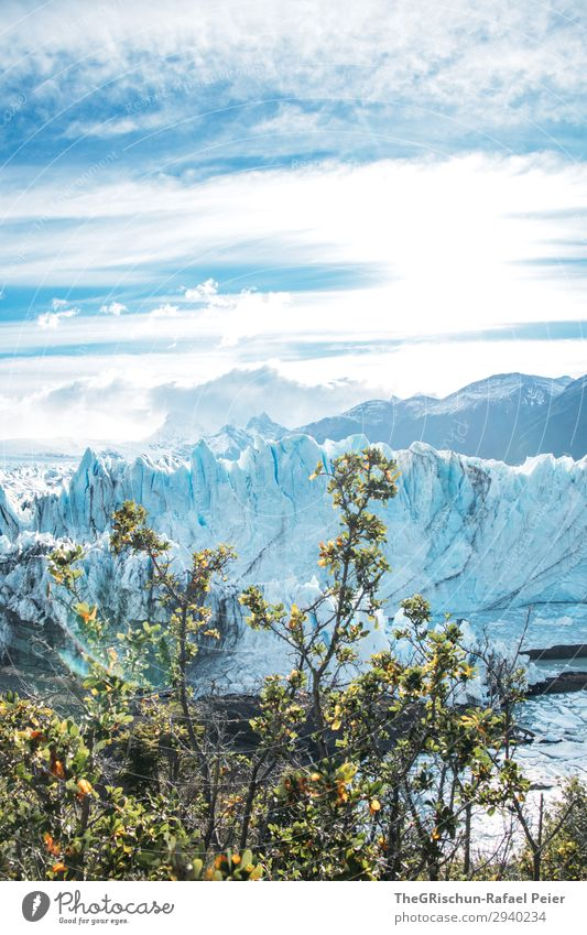 Perito Moreno Glacier Nature Landscape Blue Turquoise White Argentina Tree Bushes Iceberg Clouds Moody Water Tourism Patagonia Colour photo Exterior shot
